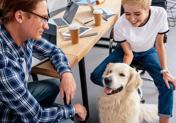 pet in office